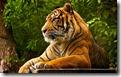 biggamecats01