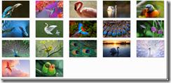 7433.birds_5F00_7FA2A89D[1]