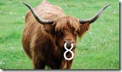 longhorn-8-flickr-intro-thumb-640xauto-22842