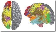 ibm-brain-2